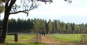 Image of open low fence at Pardelup Prison Farm