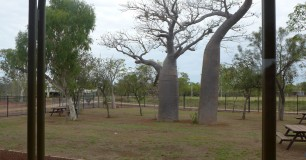 Image of Boab trees in Visits area at West Kimberley Regional Prison